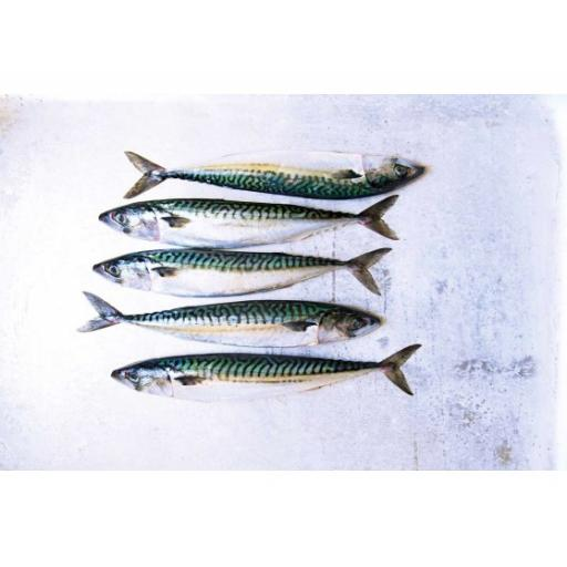 Raw Whole Mackerel 1kg